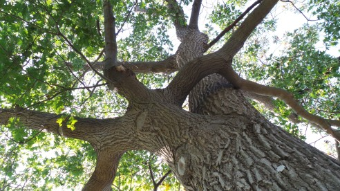 "I look up my tree and whisper ""Namaste"" and sometimes I think I hear ""Namaste"" back.  Or maybe it was the wind..."